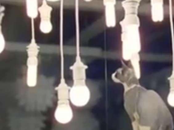 IKEA rozświetla Słupsk