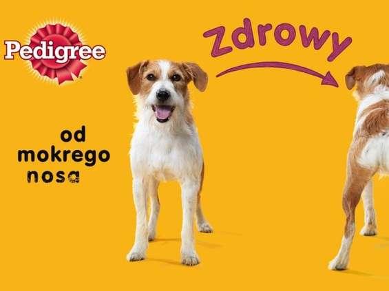 "Pedigree sponsorem programu ""Misja pies"" w TVN"
