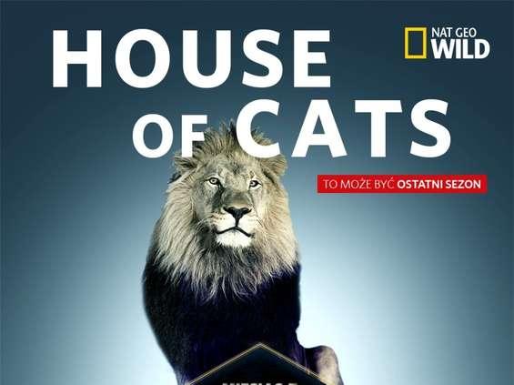 """Nat Geo Wild promuje """"Miesiąc z wielkimi kotami"""""""