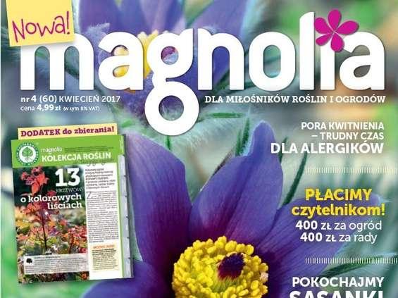 """""""Magnolia"""" w nowej odsłonie na wiosnę"""