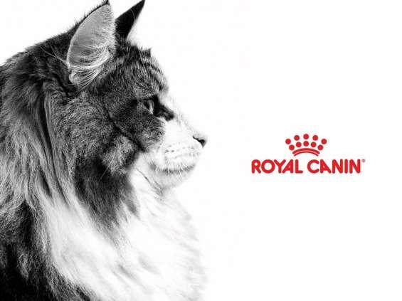 Opus B dla Royal Canin