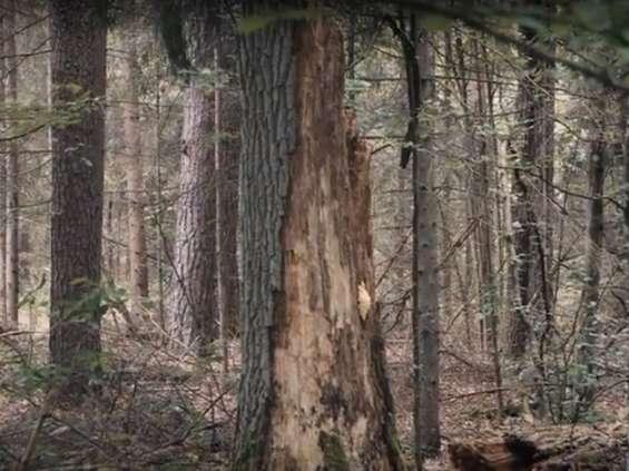 """Kampania """"Do ostatniego drzewa"""" nominowana w D&AD"""