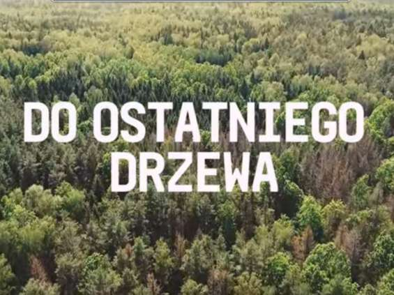Cannes Lions: 13 Lwów dla Ogilvy za kampanię na temat Puszczy Białowieskiej