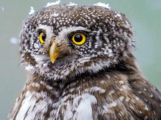Wyborcza.pl i WWF na rzecz zagrożonych gatunków zwierząt