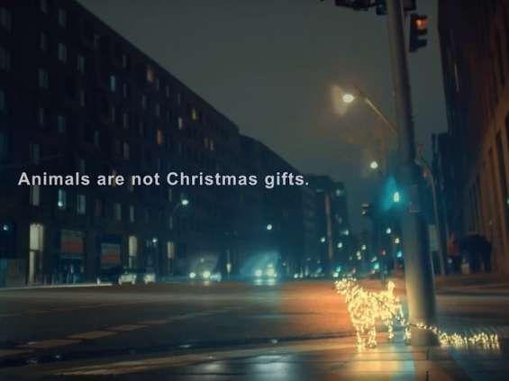PETA przypomina, że zwierzęta to nie świąteczne prezenty [wideo]