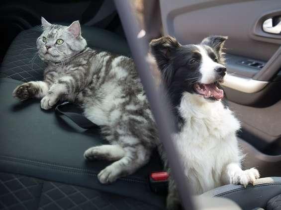 Psy i koty testują Renault Kadjar [wideo]