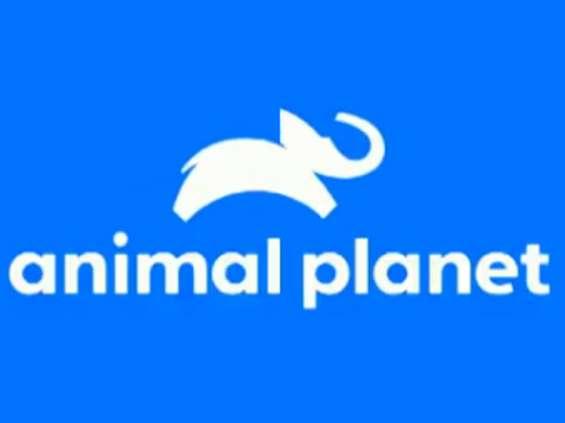 Animal Planet z nową identyfikacją wizualną w Polsce [wideo]