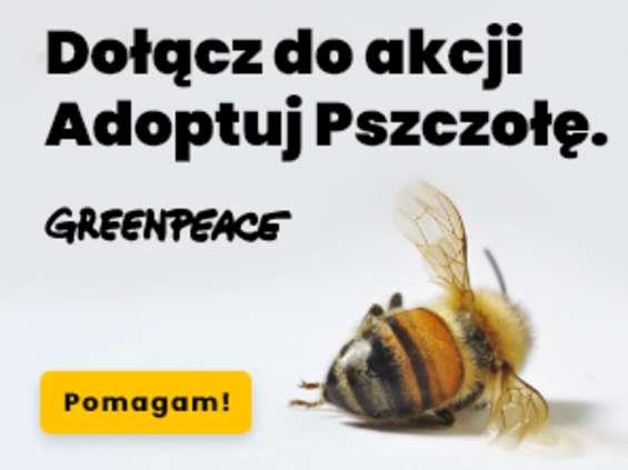 Greenpeace: rozmowa z biznesem inaczej
