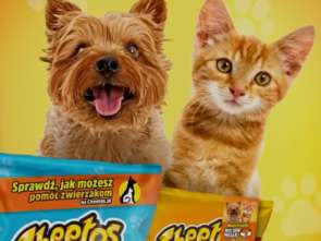 VMLY&R z regionalną kampanią Cheetosów [wideo]
