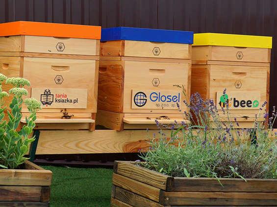 Bee.pl wspiera pszczoły i wdraża ideę less waste
